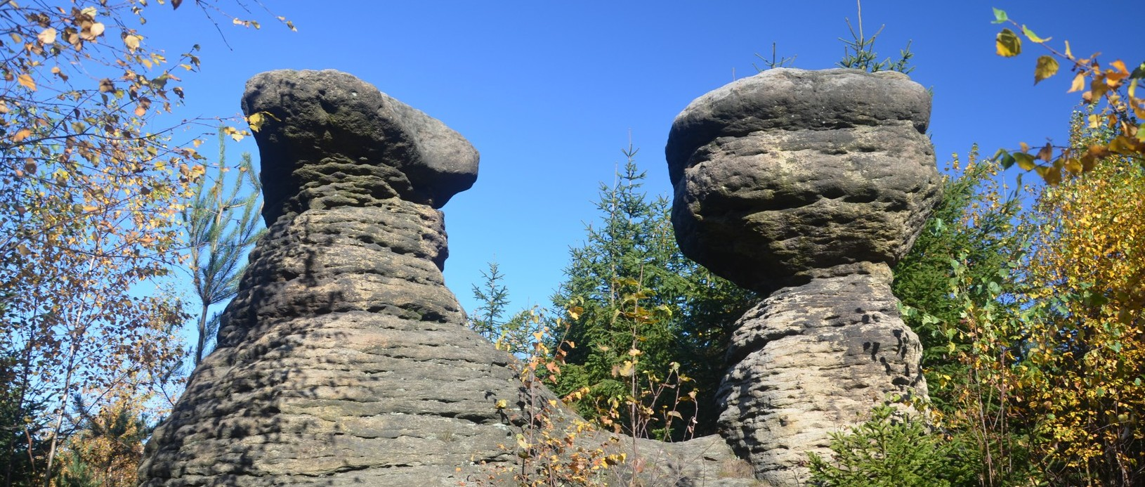 Kamenné hřiby
